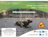 Protégeons les amphibiens sur nos routes !