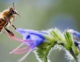 1ères assises nationales des insectes pollinisateurs en ville